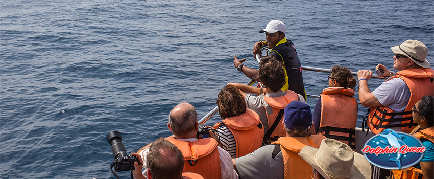 10 Dolphin Facts That Will Change Your Mind About Dolphin Cruise Tours