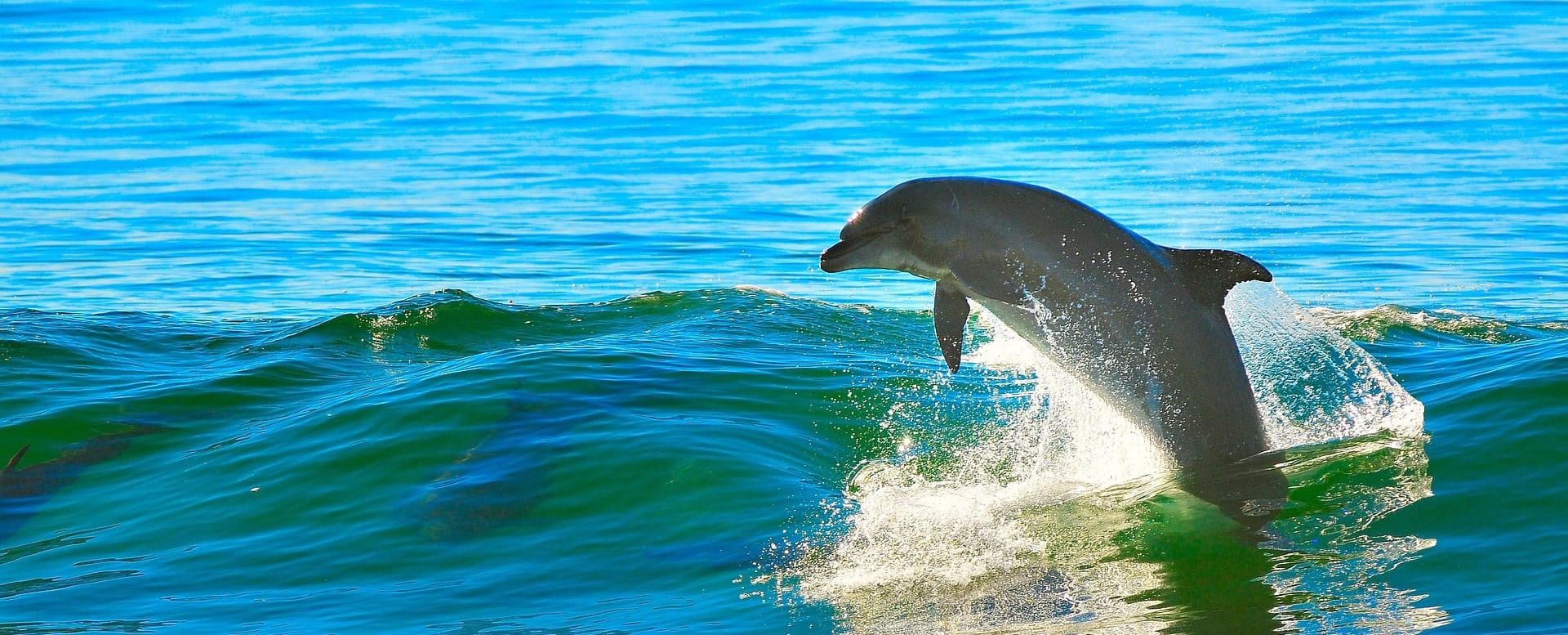 DOLPHINS HANDLE A HURRICANE OR TROPICAL STORM Quest