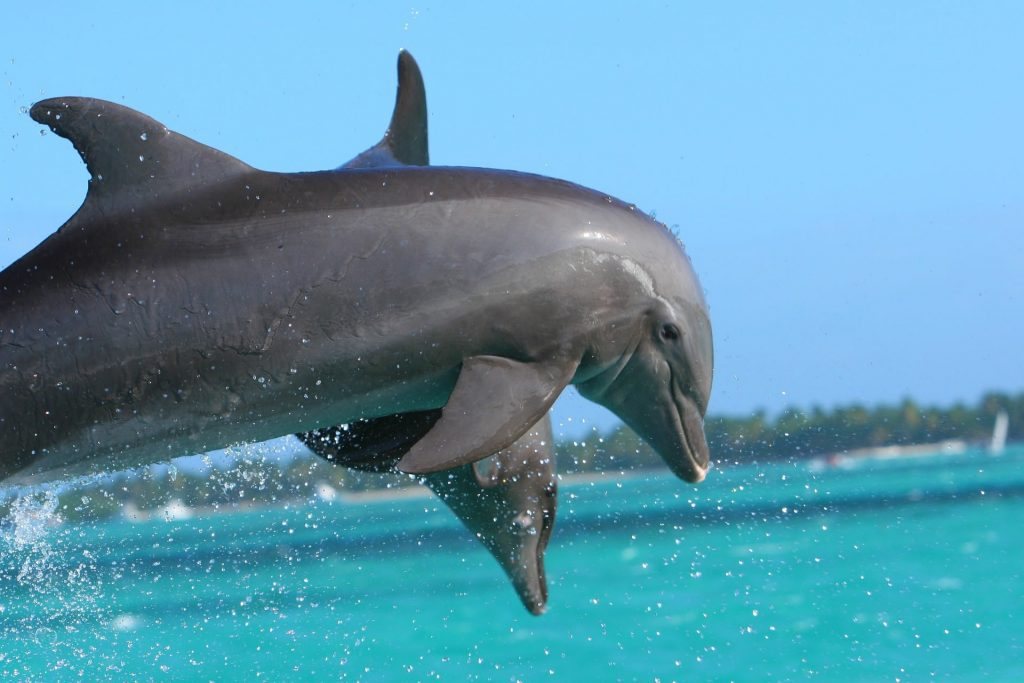 SST Dolphin