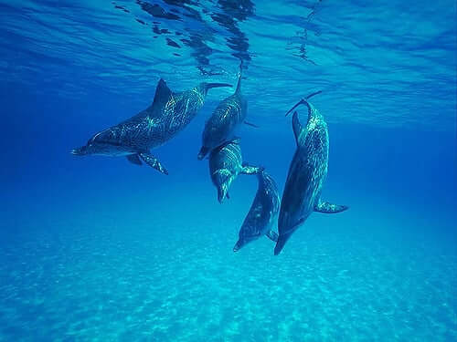 Dolphins Getting Along Quest