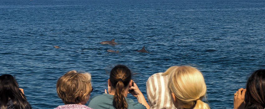 4 Tips for a Responsible Dolphin Cruise Tour