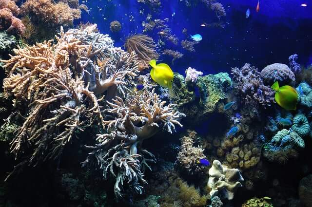 CLIMATE CHANGE AND ITS DEVASTATING EFFECT ON CORAL REEFS