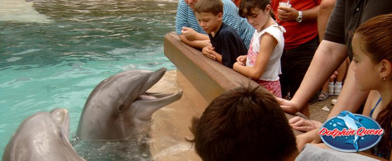 6 Reasons Why Dolphins Shouldn't Be in Captivity