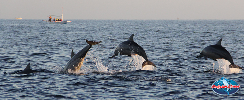 8 Facts You Should Know Before Your Next Dolphin Watching Tour