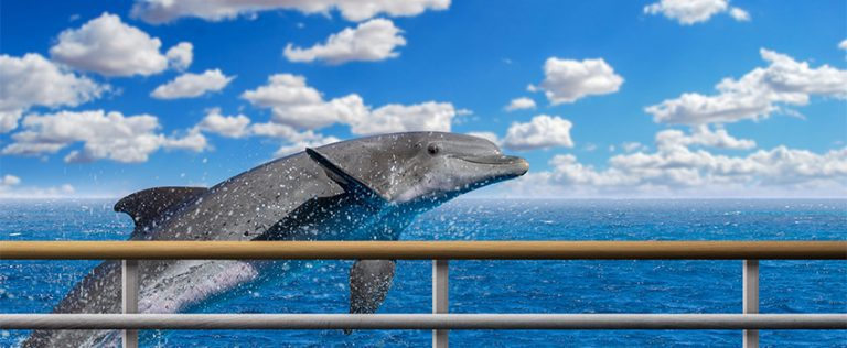 8 Tips to Choosing the Best Dolphin Cruise That is Right For You