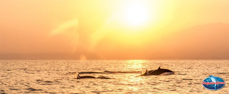 Dolphin and Human Interaction - Is There a Special Bond