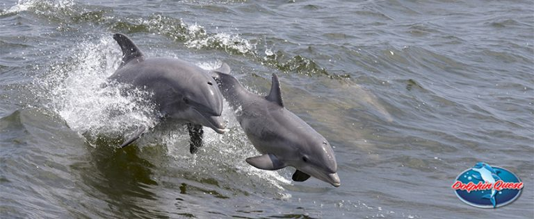 Friendliest Sea Creatures - Explaining Dolphin Altruism