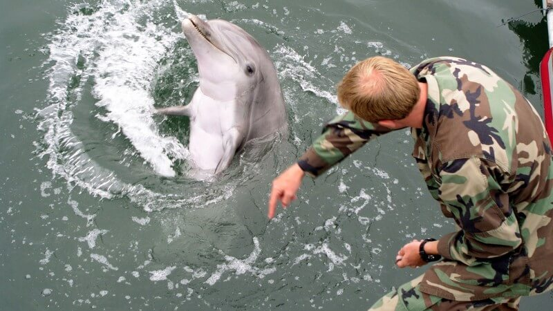 DOLPHINS AND THE US MILITARY