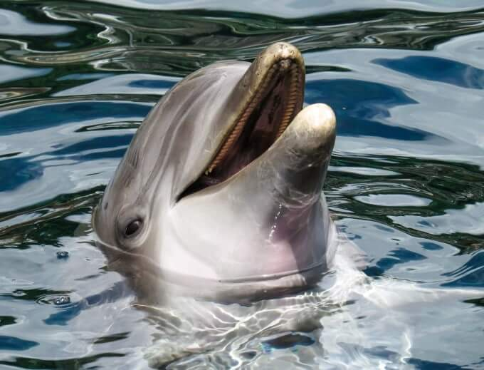 SST Dolphins