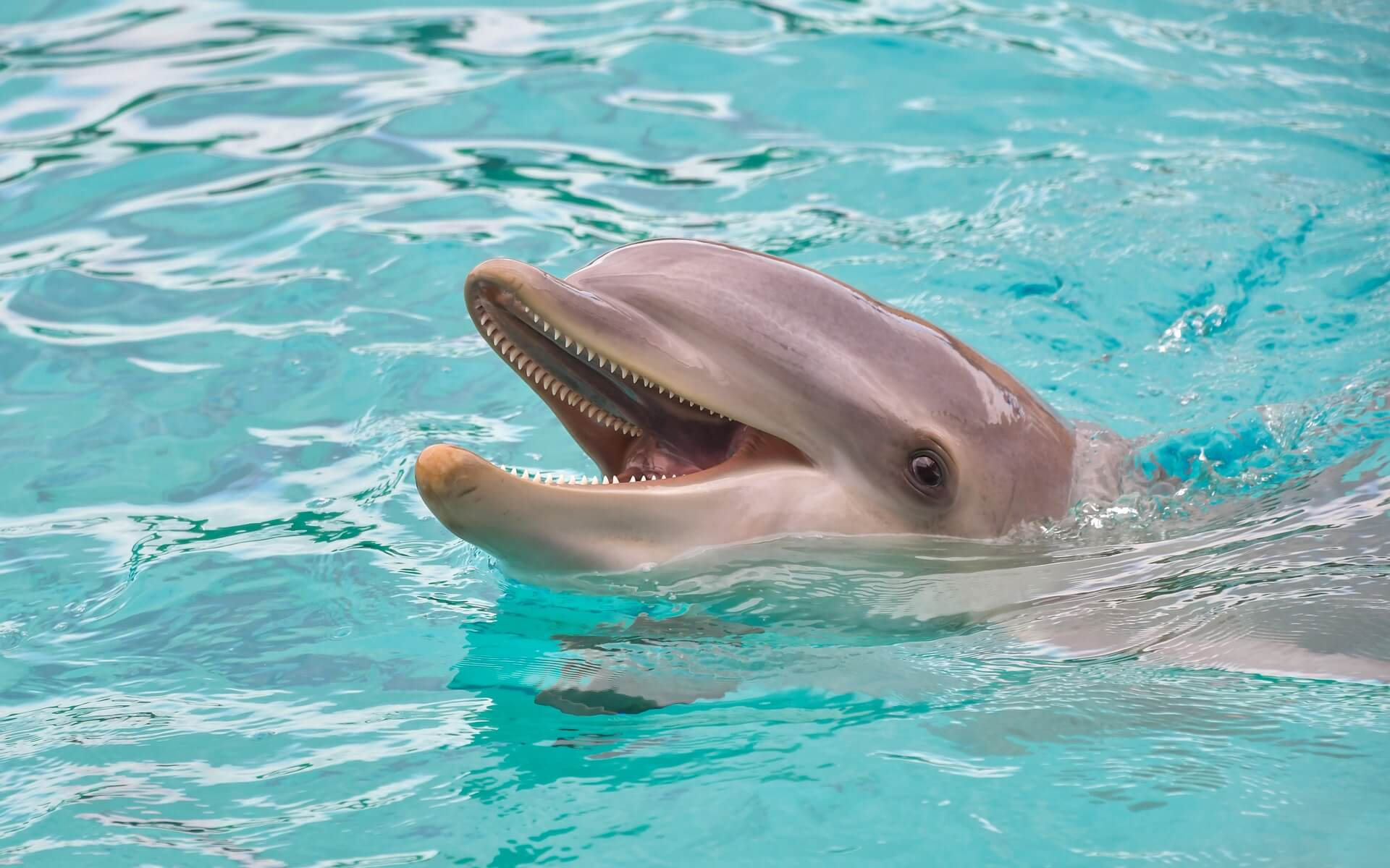 A PARADISE FOR BOTTLENOSE DOLPHINS Quest