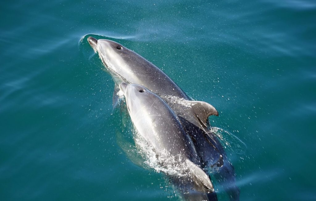 DOLPHINS COMMUNICATE Dolphin Quest